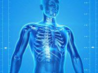 Kurs anatomii i fizjologii człowieka